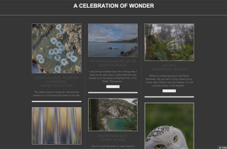 A Celebration Of Wonder
